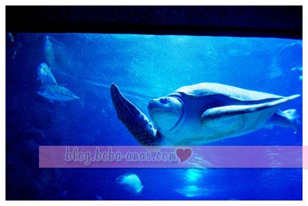 aquaria-klcc-encik-penyu